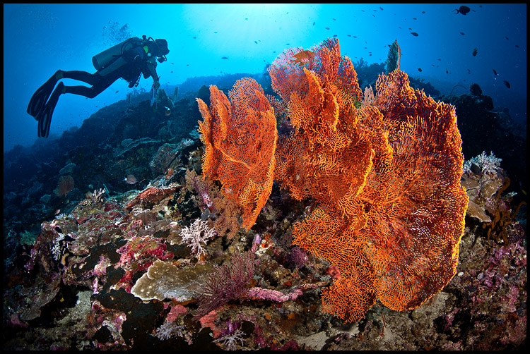 Emily and gorgonian