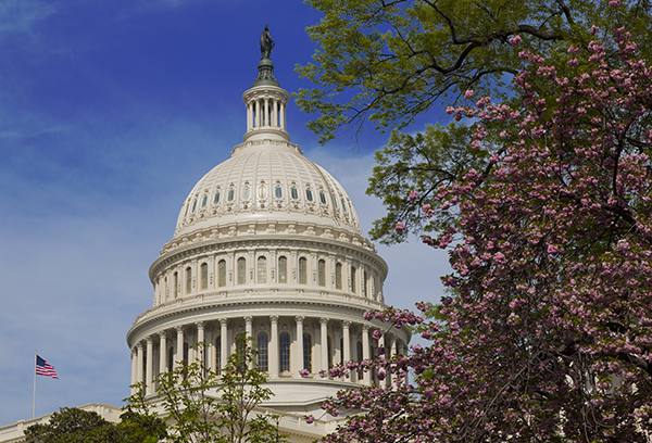 Capital Dome and Spring Blossoms