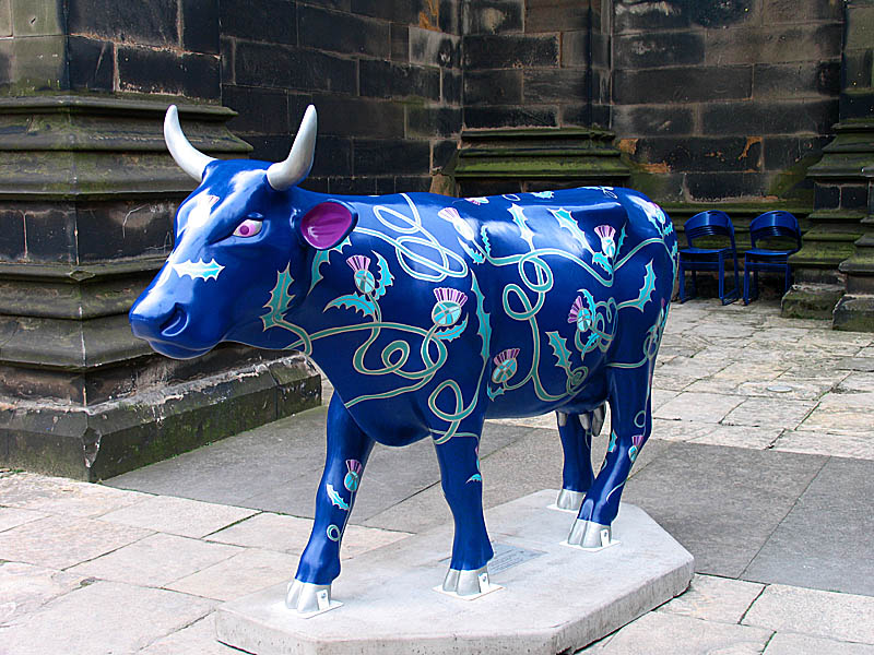 Thistle the Cow