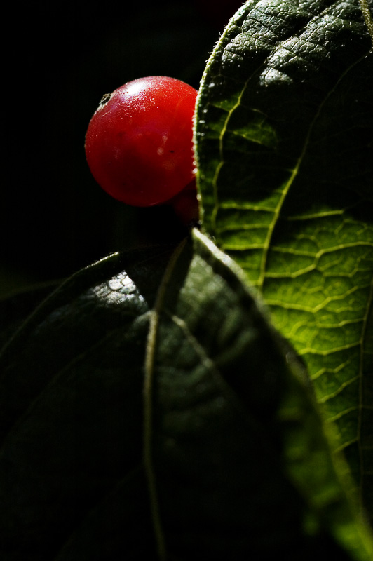 vibrant - 09.jpg