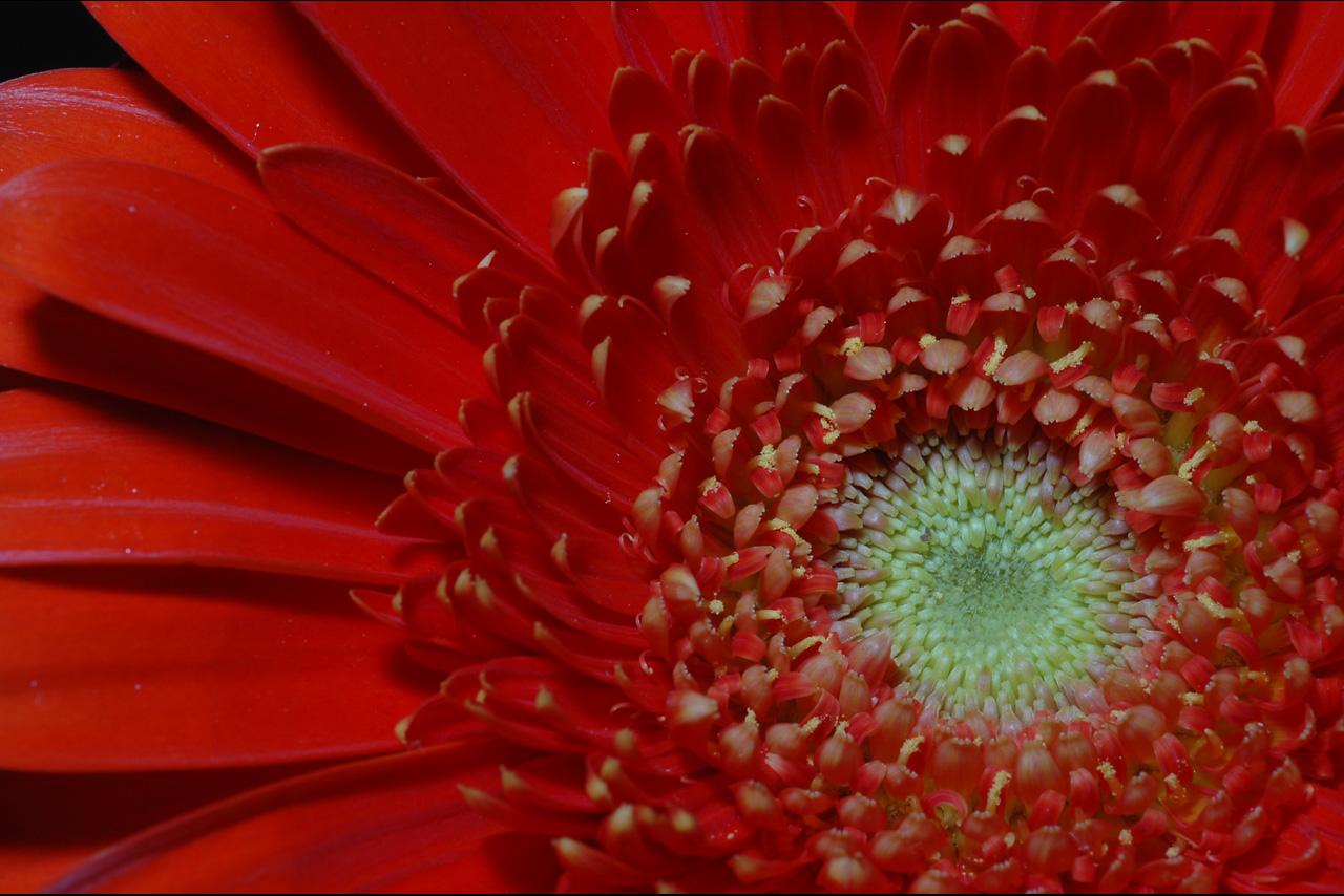 050402 Hotel Flower.jpg
