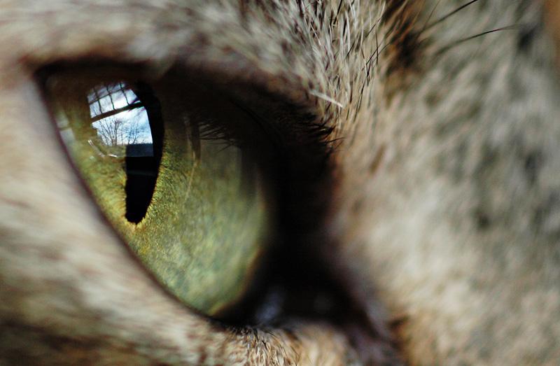 What she sees.jpg
