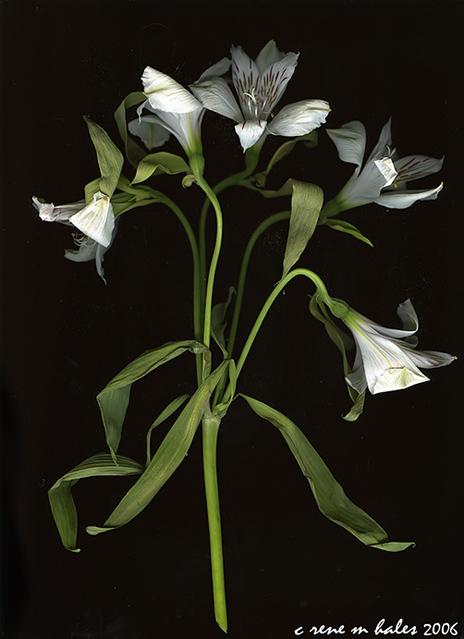 alans flowers