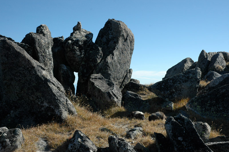 Marmot Stonehenge