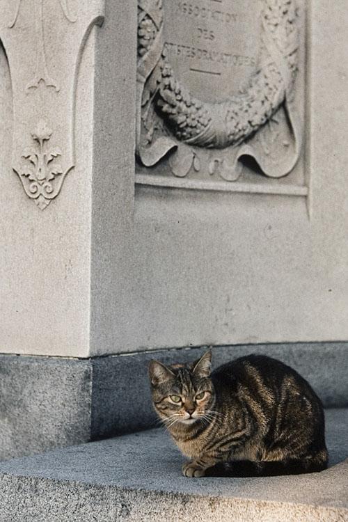 Chat de cimetière