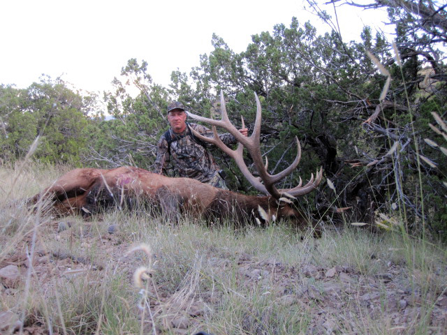 My New Mexico Bull Elk - Bowhunting forum