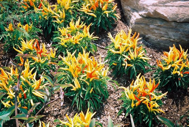 06flowers.jpg