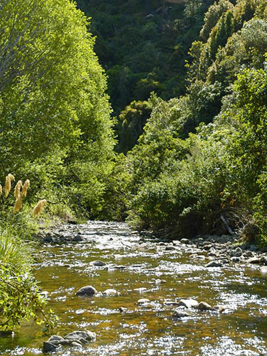 Catchpole Stream, Rimutaka Forest Park