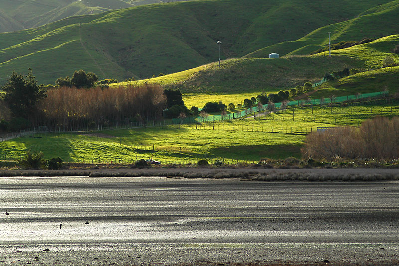 Hills North of the Pauatahanui Inlet