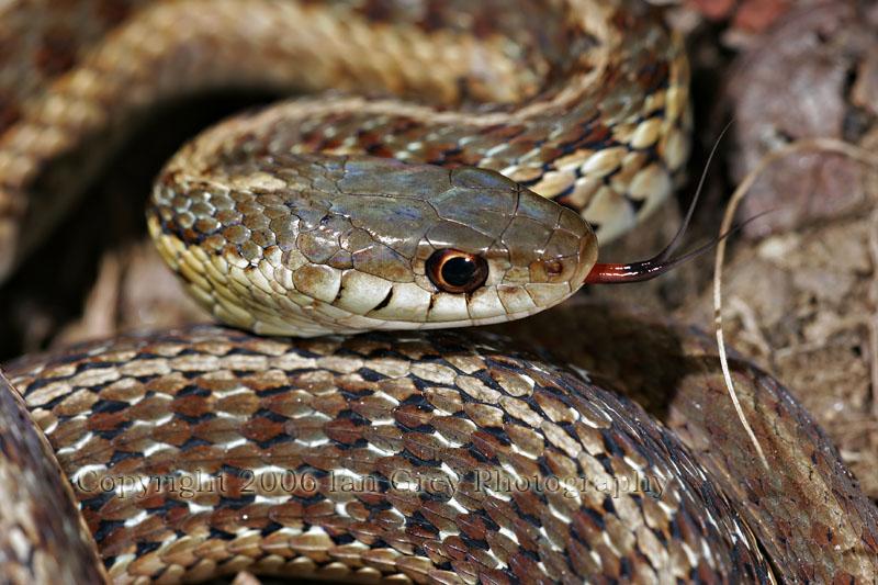 IMAGE: http://www.pbase.com/iangreyphotography/image/64116200/original.jpg