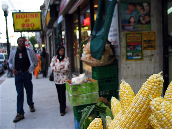 Walking towards corn