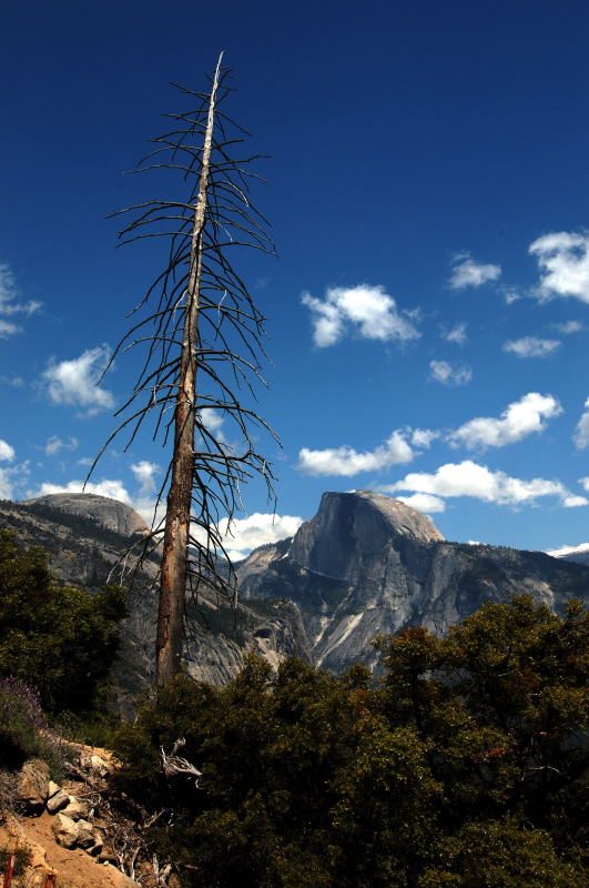 Half Dome from Yosemite Fall trail