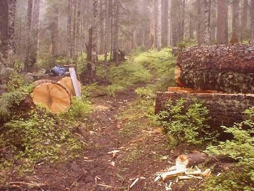 Vanson Ridge Trail