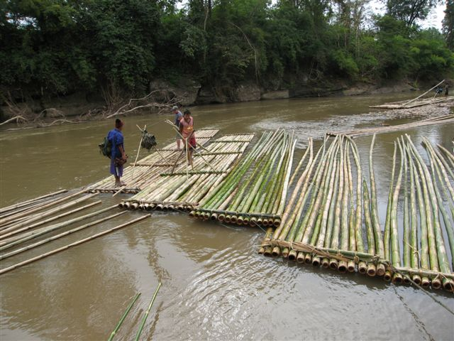 adding a few extra bamboo poles