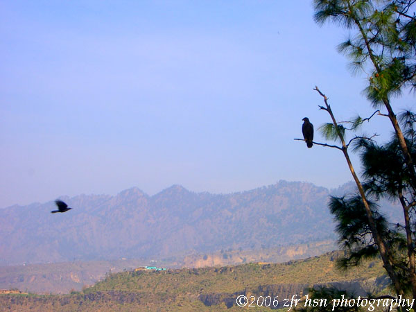 Eagles view along Kotli road
