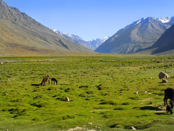 Fields on Shandur Pass, Northern Areas