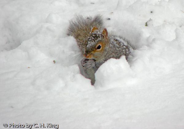 Squirrel looking for breakfast