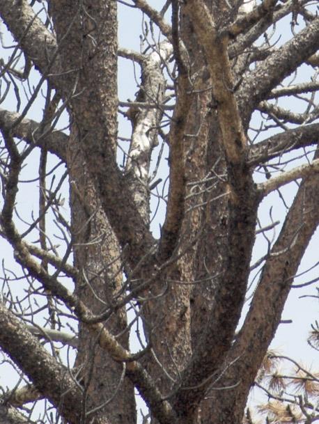 zzc3A_MG_0856 Tree 180 TC 1-4.jpg