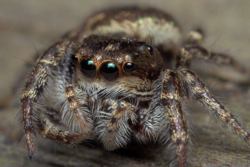 Jumping Spider Story Part - 5