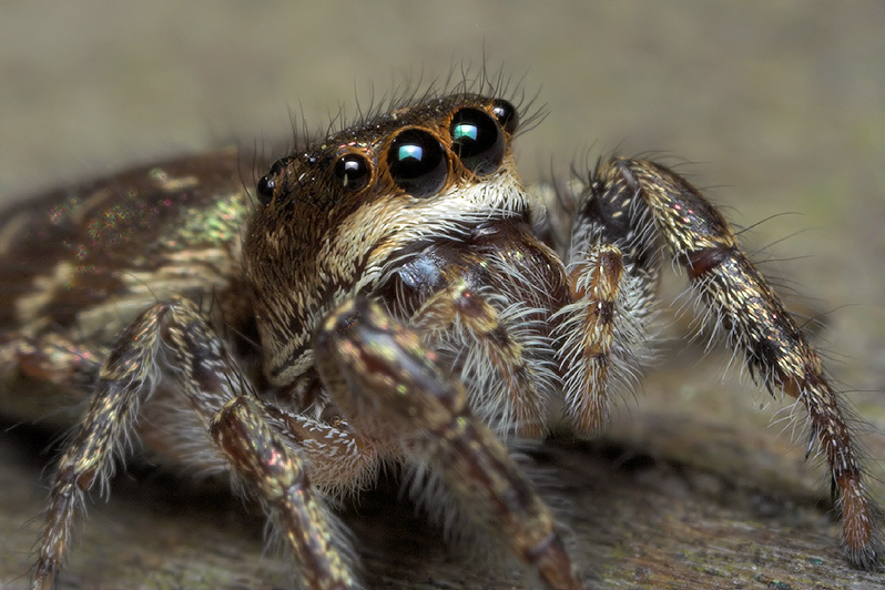 Jumping Spider Story Part - 6