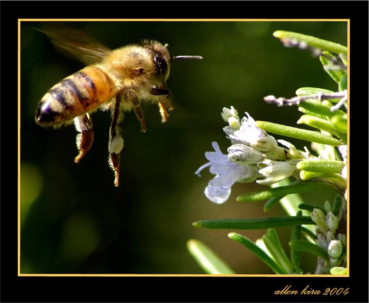 BEE 1.jpg