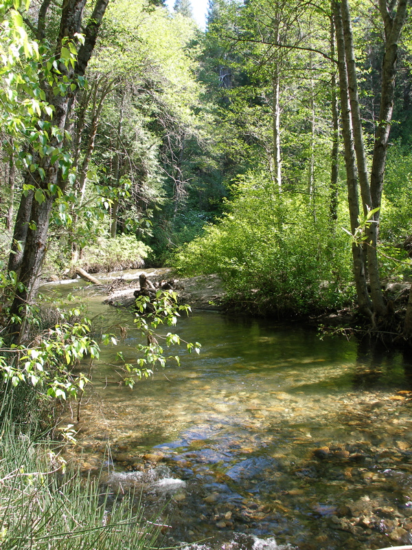 South Fork of the Tuolumne River