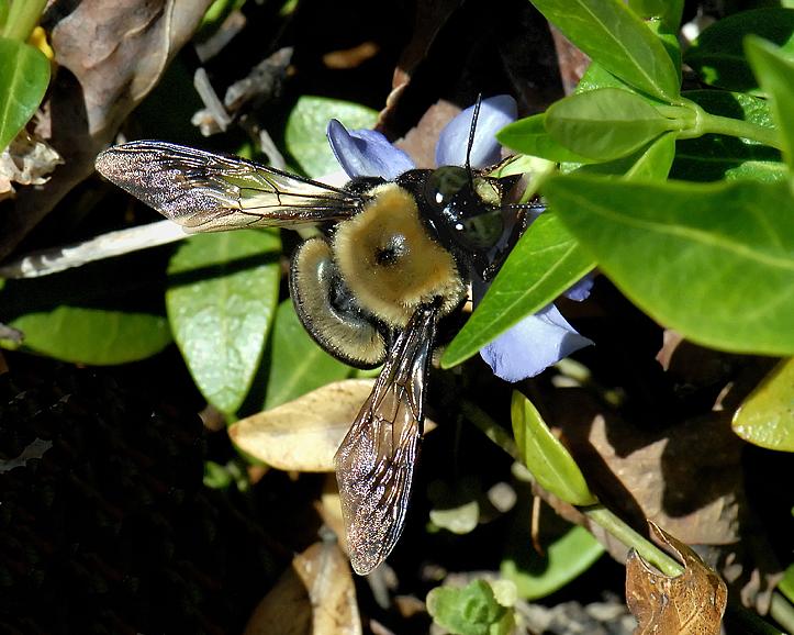 BEE WINGS.jpg