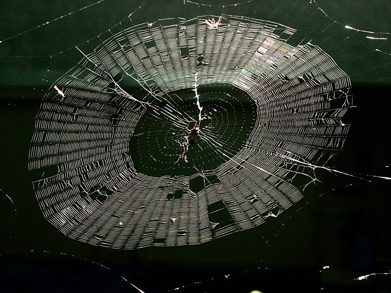 A spider web, not a CD<br>6945