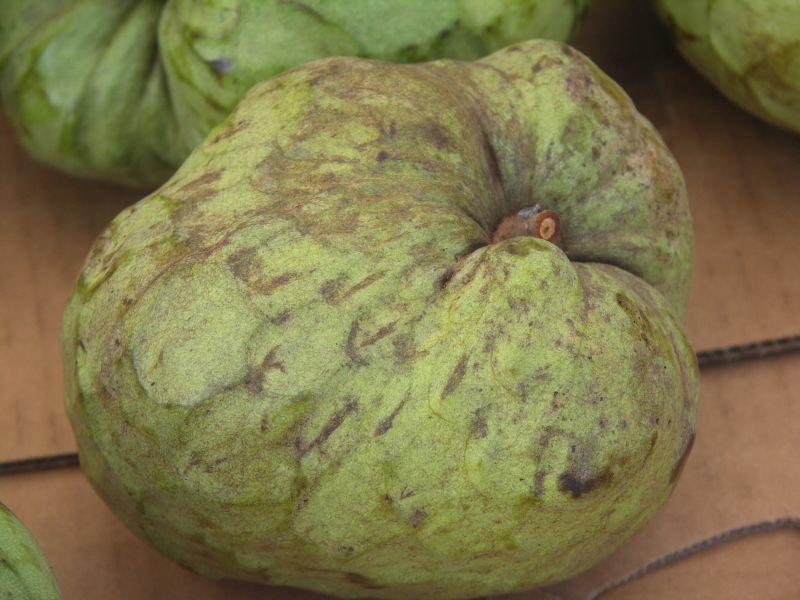 Cherimoya  (Annona cherimola )