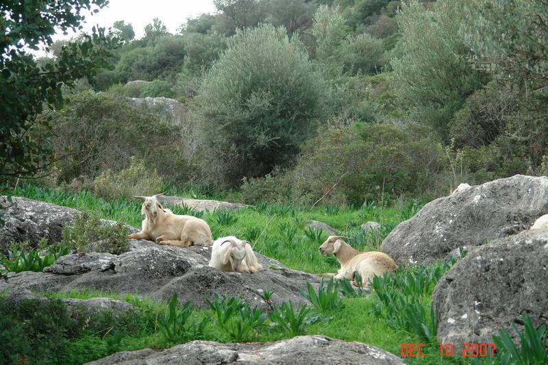 Lycian cities_13.JPG