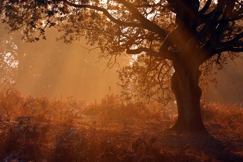 Morning Rays 1