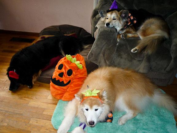 My pumpkin pack