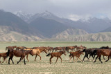 Silkroad: Turkmenistan to Xinjiang