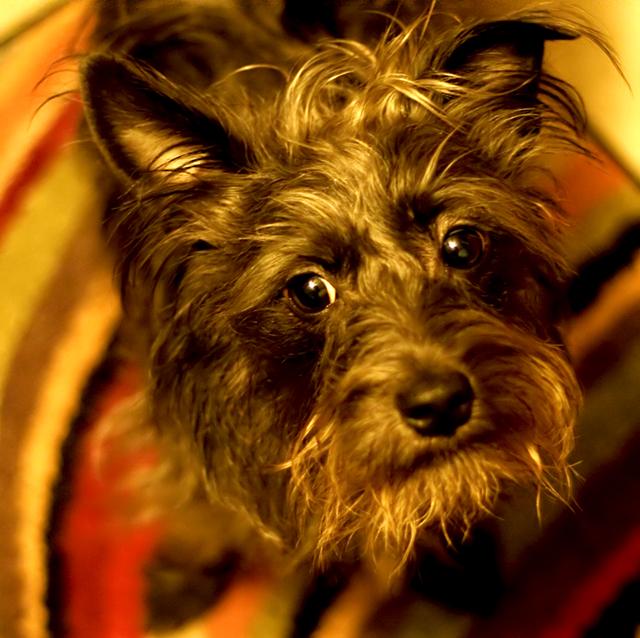Allie on rug