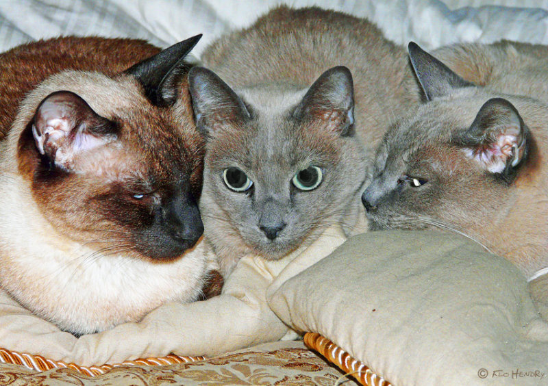 Gus, Bea & Bo