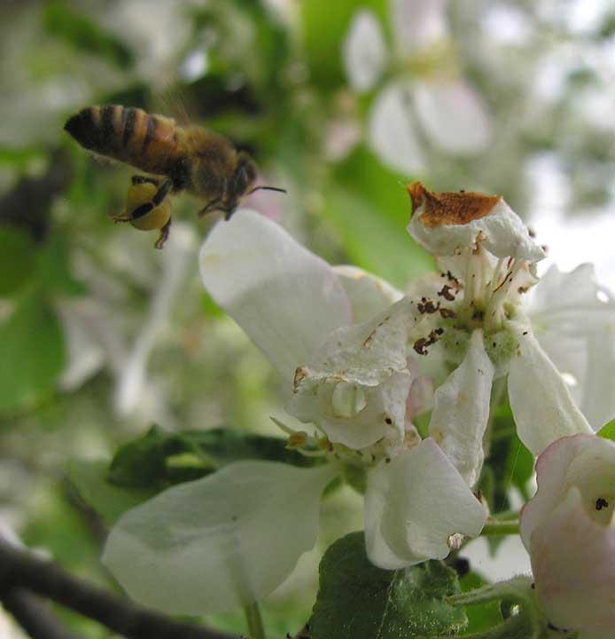 bees-7016-large.jpg