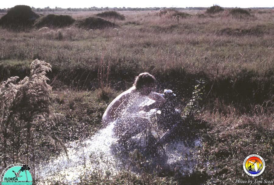 Artesian well bathing2.jpg