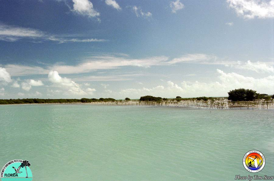 Florida Bay mud bank and mangroves.jpg