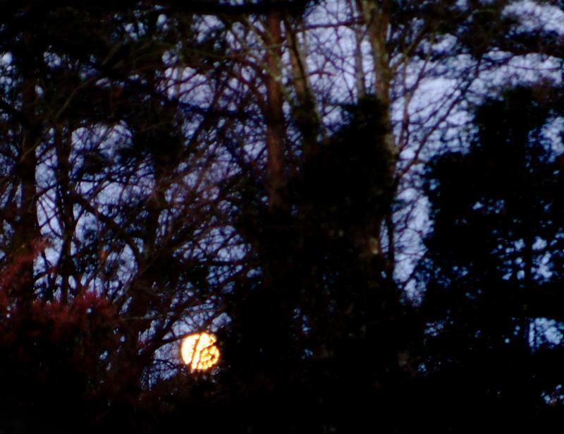 Mar. 15 - goodbye worm moon