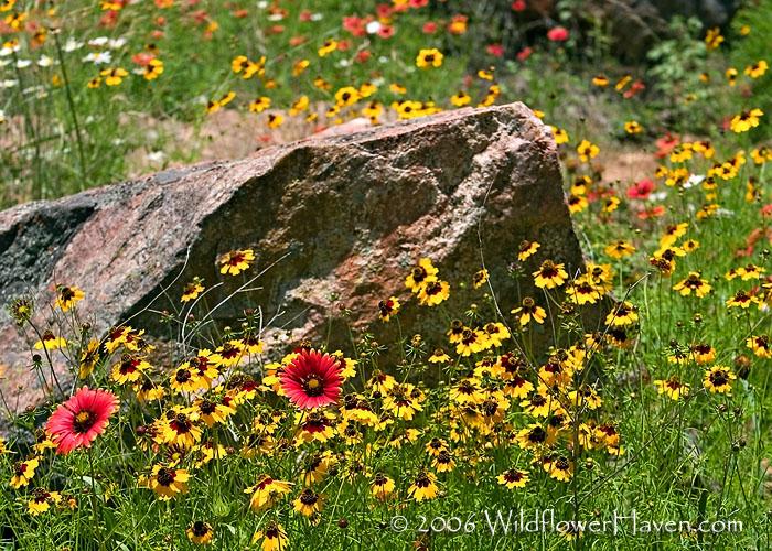 Rock N Wildflowers