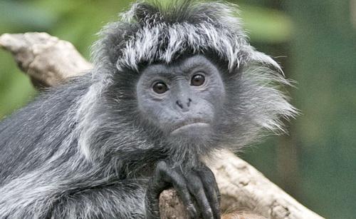 Monkey_059.jpg