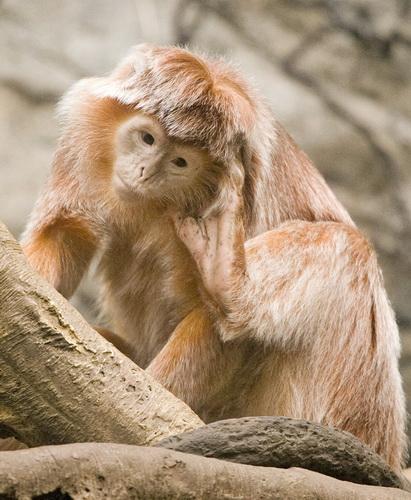 Monkey_066.jpg