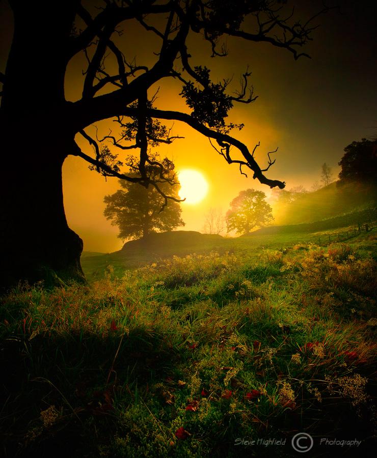 Dawn Mist.