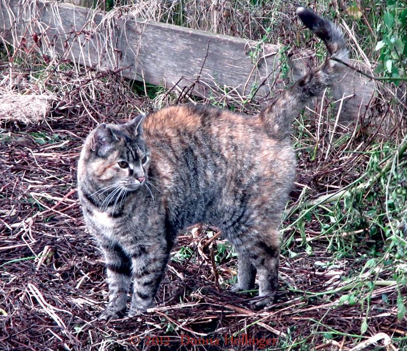 Windy Hill  Farm Cat