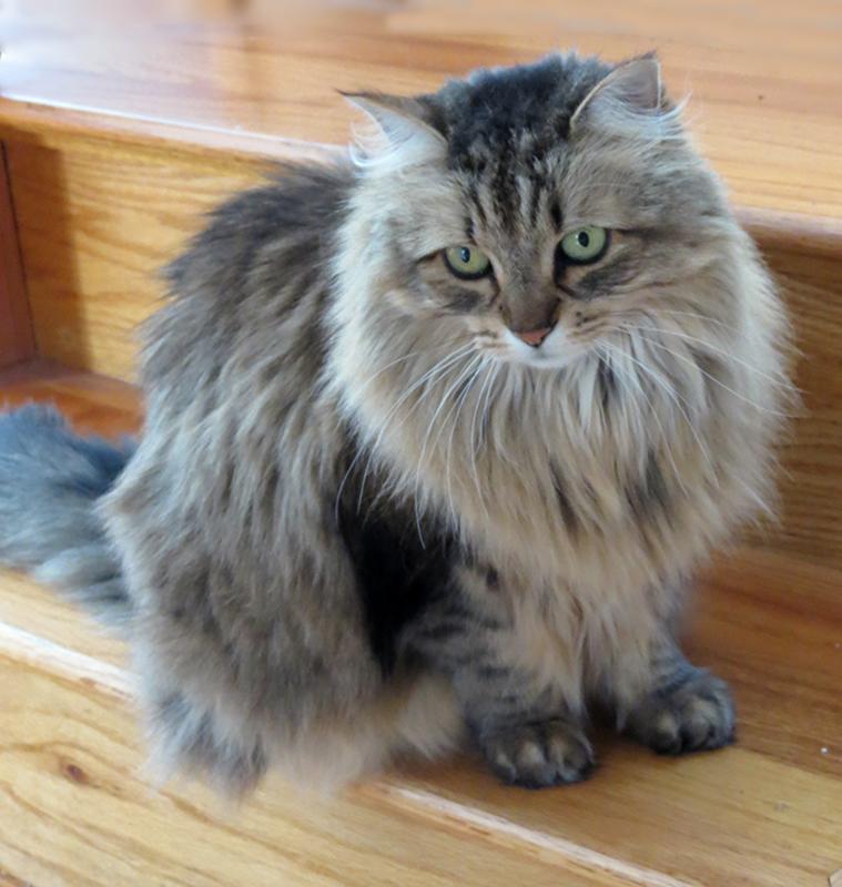Annis Cat Poco