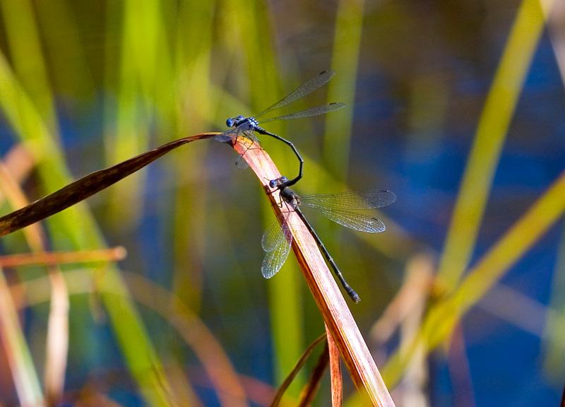 Autumn mating