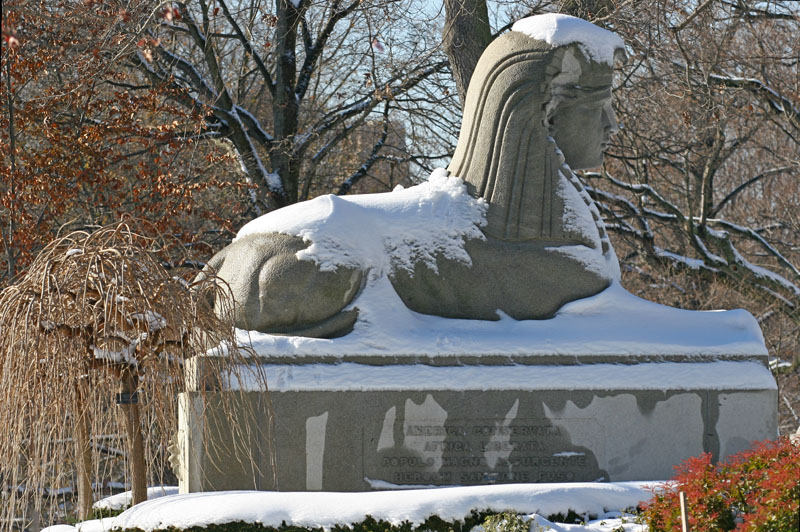 Snowy Sphinx