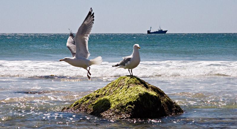 Seagulls: Hey You!