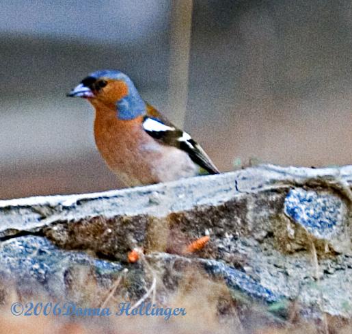 Bird in Platres