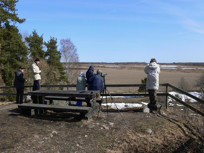 Ormspaning på Öby kulle - Looking for snakes at Öby kulle